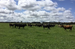 Picture of Lot 8 Fisheries Rd, Myrup WA 6450