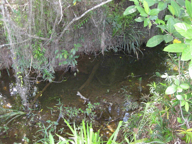 Granadilla QLD 4855, Image 1