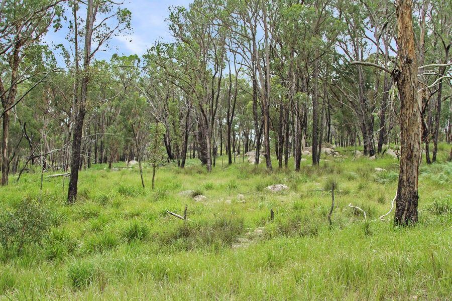 1214 Mt McKenzie Road, Tenterfield NSW 2372, Image 2