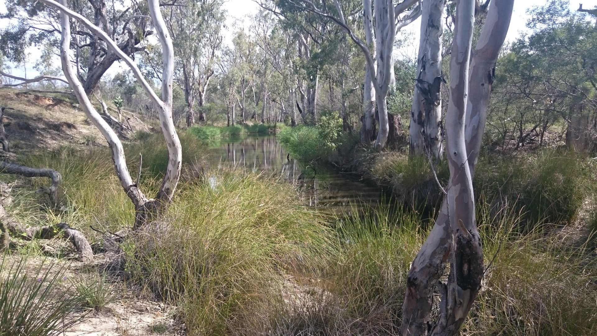 Limevale-Greenup Rd, Coolmunda QLD 4387, Image 1