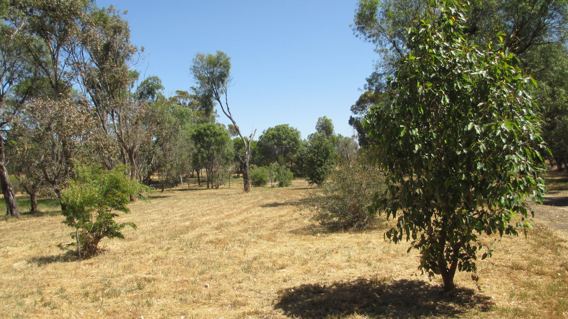 """Taylor's Well"" Lot 27 Morrison Road, West Pingelly WA 6308, Image 1"