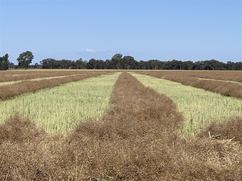 'Linwood' Kardinia Road, Corowa NSW 2646, Image 2