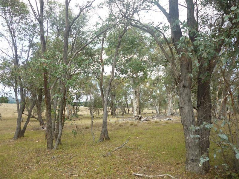 2341 Mayfield Rd, Tarago NSW 2580, Image 1