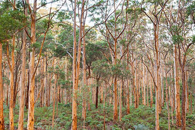 Picture of Lot 254 Felling Road, KARRIDALE WA 6288