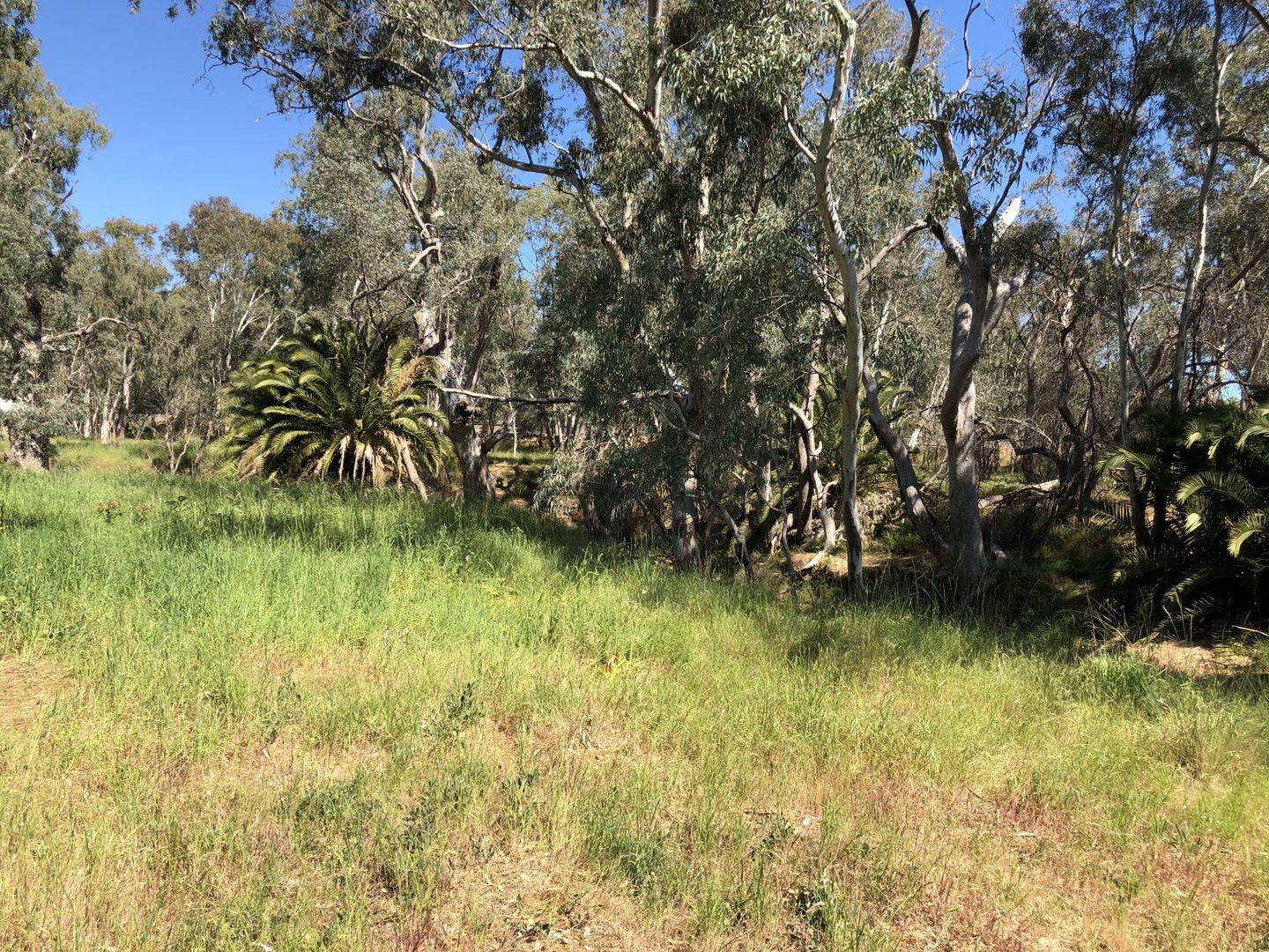 Lot 7 Adams Street, Marong VIC 3515, Image 0