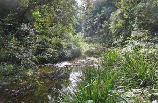 Picture of 1413 Kalang Road, Bellingen NSW 2454
