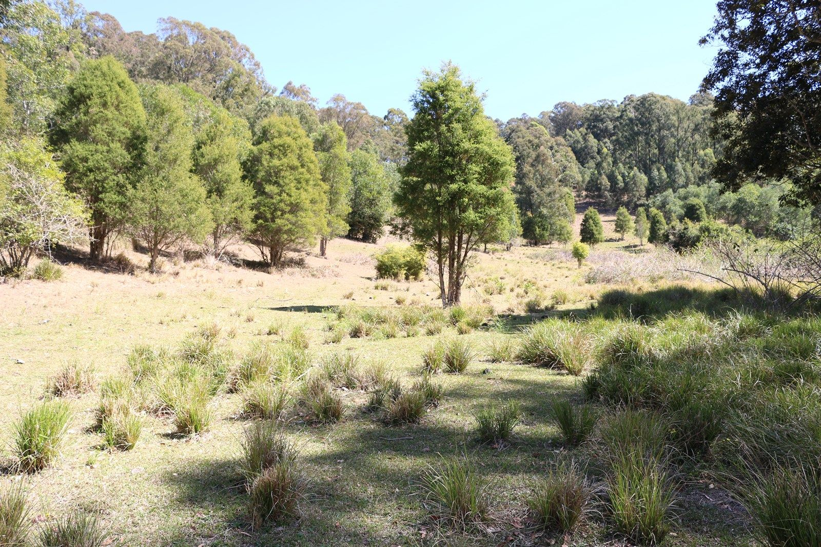 Marlee NSW 2429, Image 2