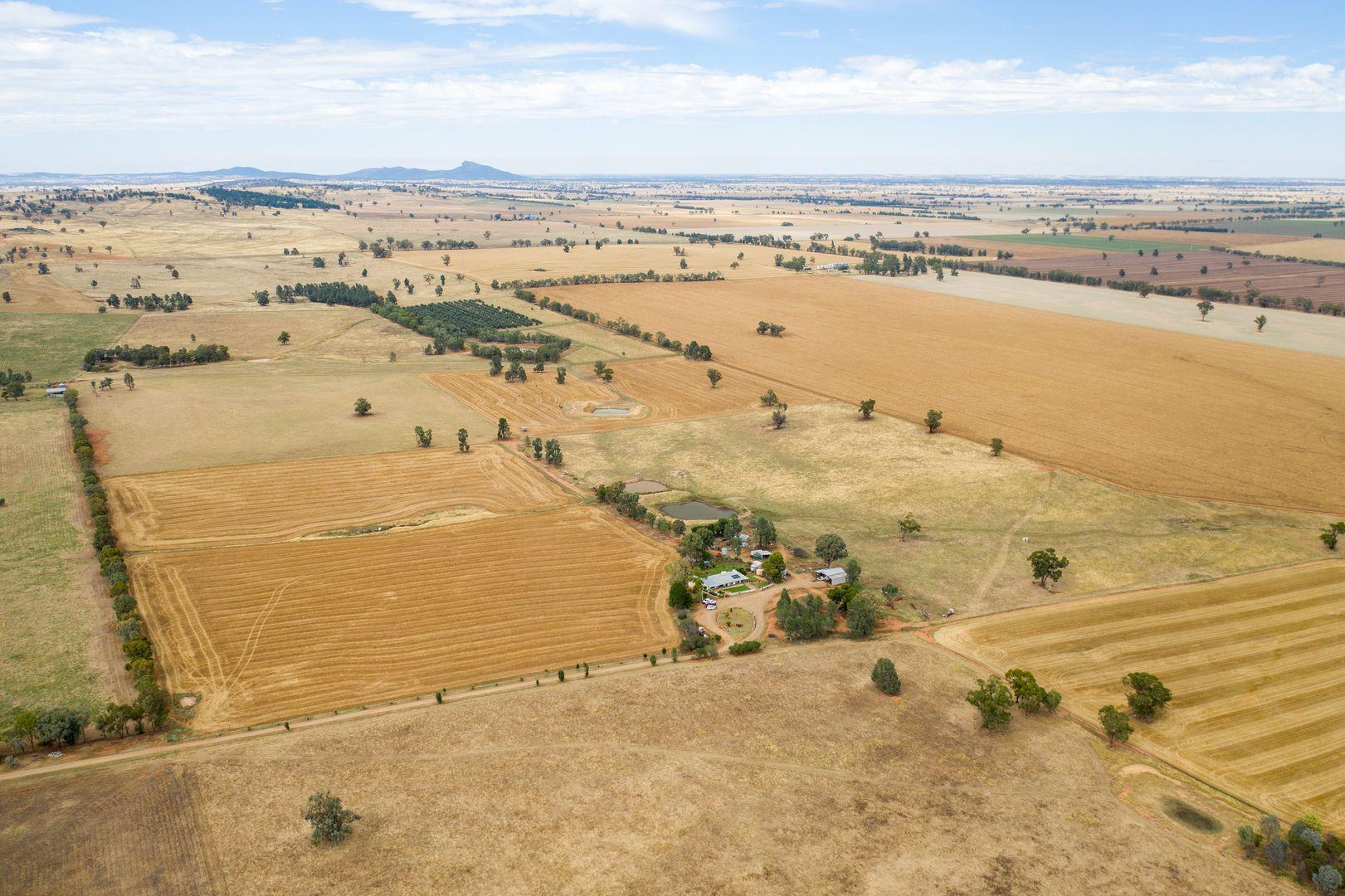 135 Eleven Mile Lane, Yarragundry via, Wagga Wagga NSW 2650, Image 2