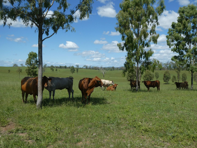 Mingo QLD 4625, Image 1