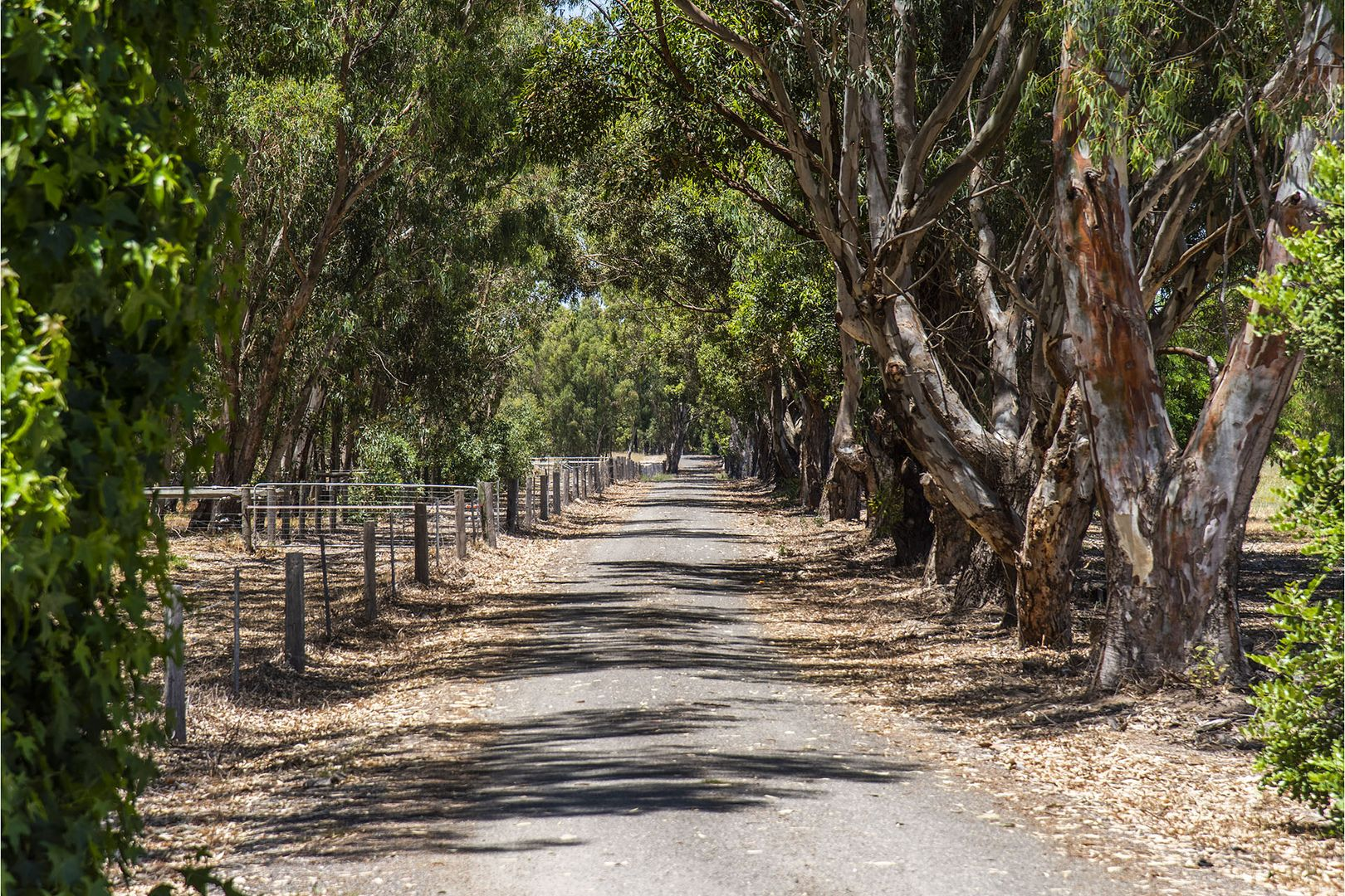 Lot 403, 76 Gull Road, Serpentine WA 6125, Image 2