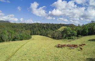 Picture of 224 Upper Eel Creek Road, Langshaw QLD 4570