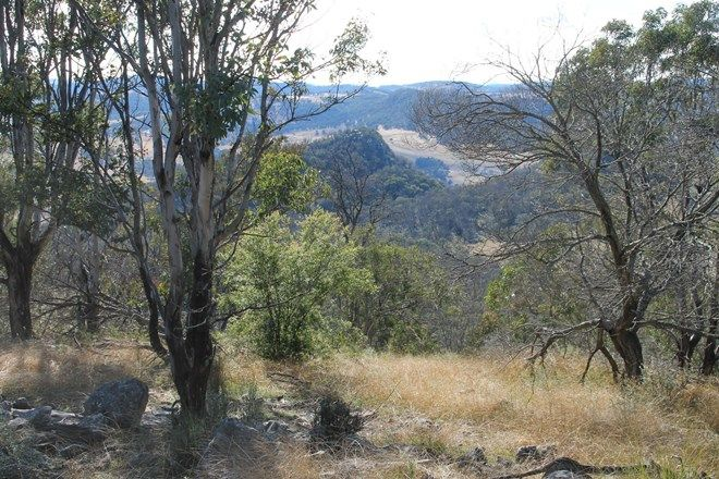 Picture of Lot 24 Bluff Creek Road, TENTERFIELD NSW 2372
