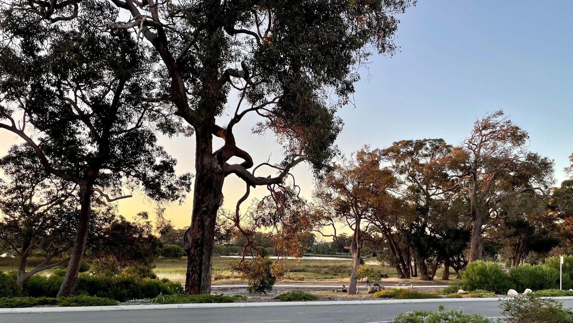7 Willandra Grove, Lakelands WA 6180, Image 2