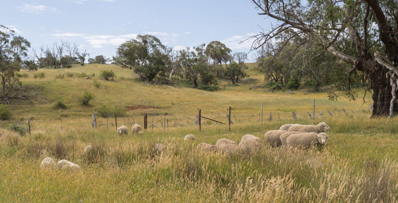 Lot 32 Boongarra Road, Laggan NSW 2583, Image 1