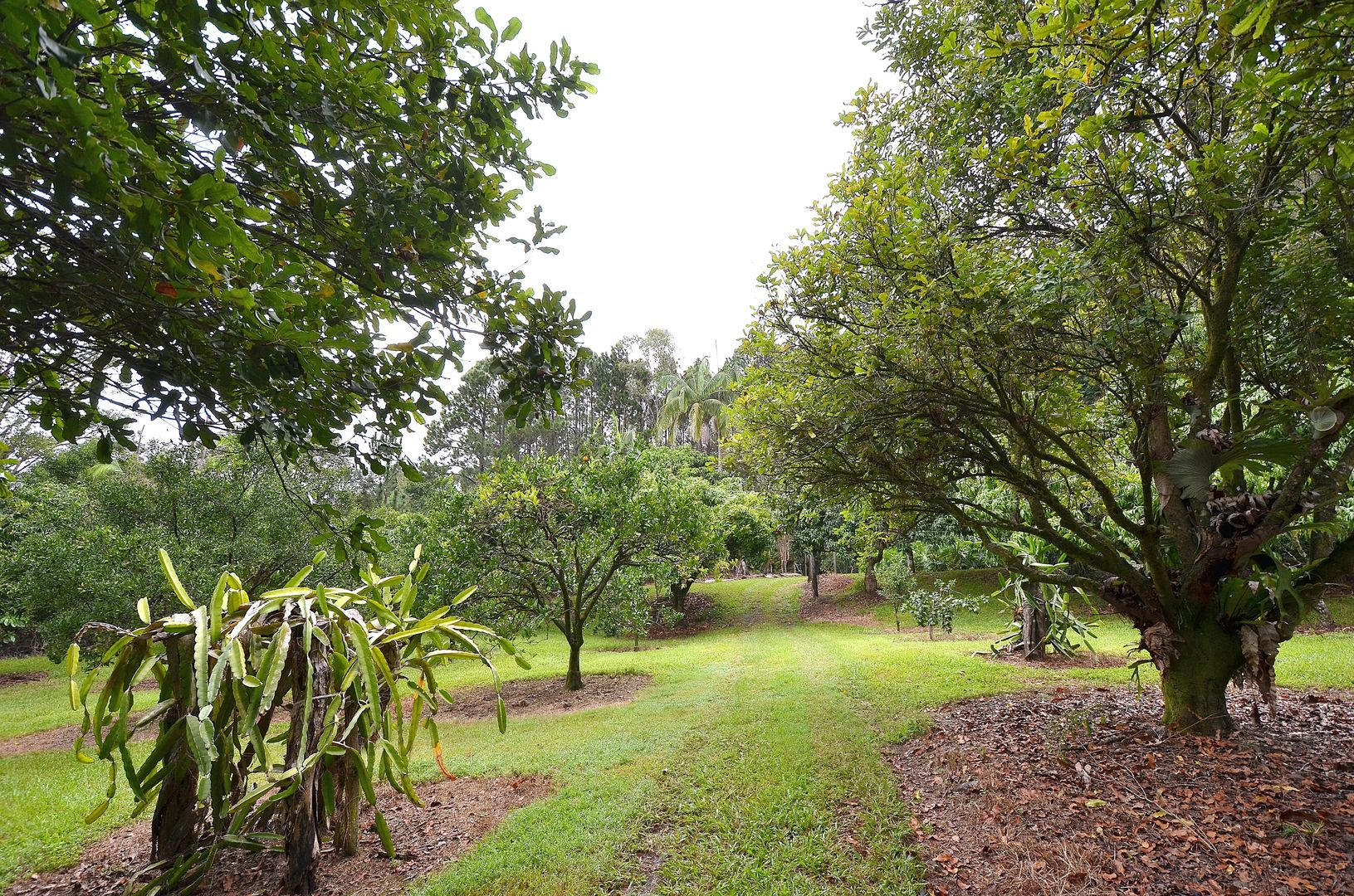 69 Estelle Road, Currumbin Valley QLD 4223, Image 2