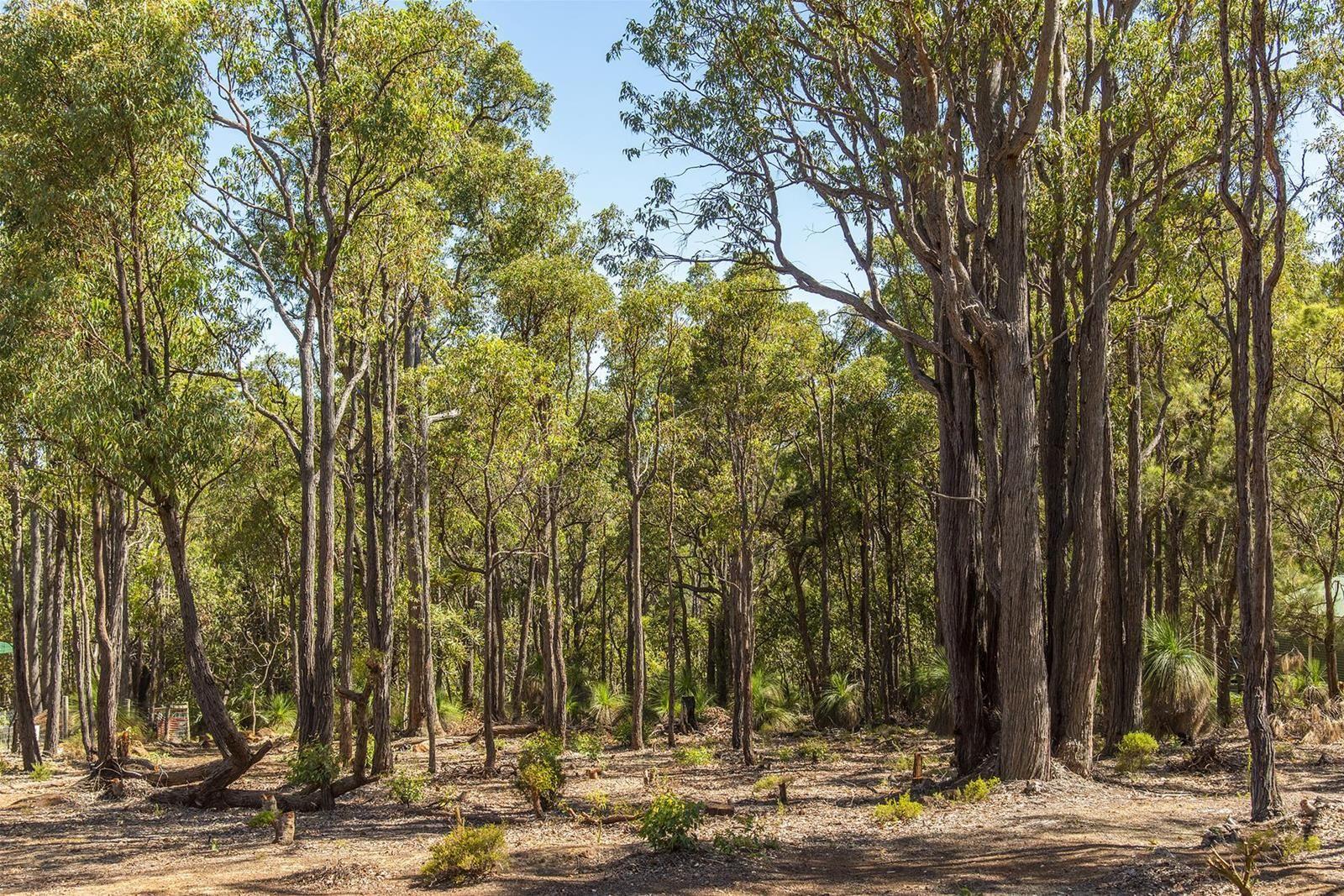 6 Forestedge Retreat, Roleystone WA 6111, Image 2