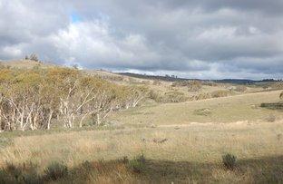 Picture of Lot 47 Tom Groggin Road, Nimmitabel NSW 2631