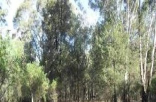 Lot 12, 6 Christie Drive, Gilgandra NSW 2827
