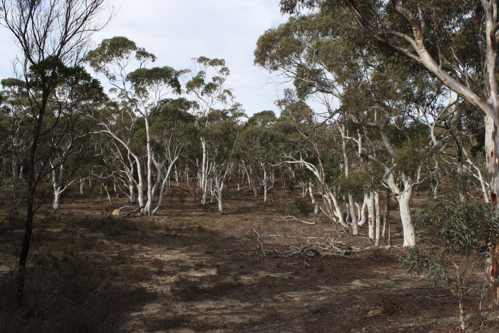 726 Willow Glen Road, Lower Boro NSW 2580, Image 1