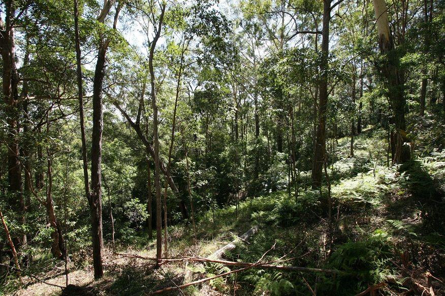 Doonan QLD 4562, Image 1