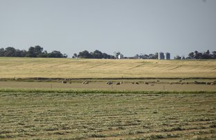 Picture of 2430 Beejenup Rd, Tambellup WA 6320