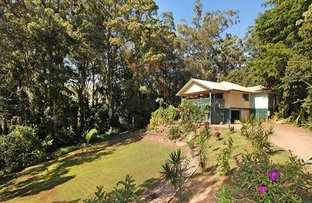 Picture of 41 Mango Vale Court, Diddillibah QLD 4559