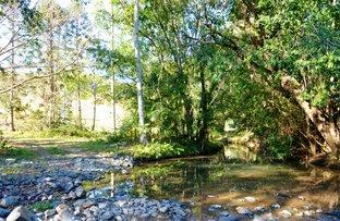 Conondale QLD 4552