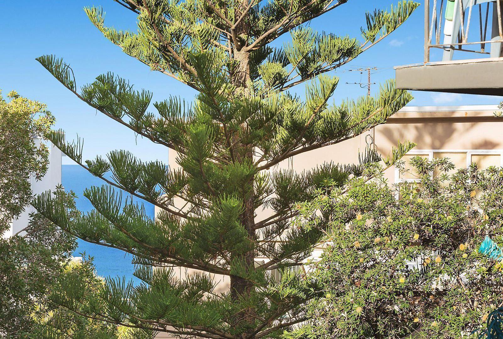 9/1 Ozone Street, Cronulla NSW 2230, Image 2