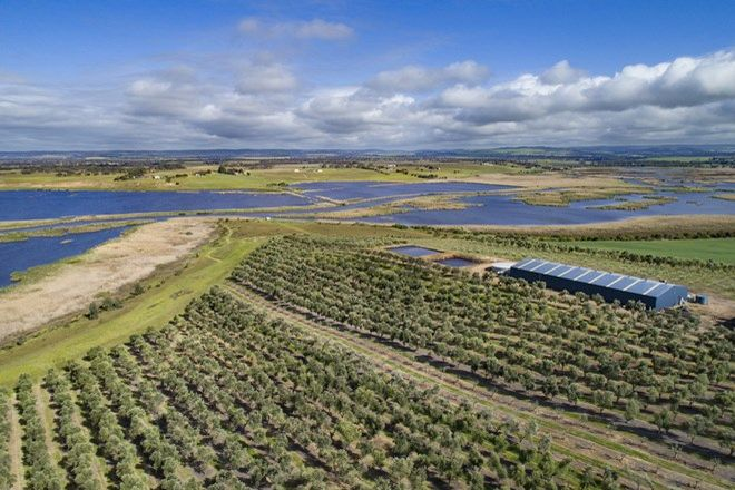 Picture of 'Australian Olive Company' - Finniss-Clayton Road, FINNISS SA 5255