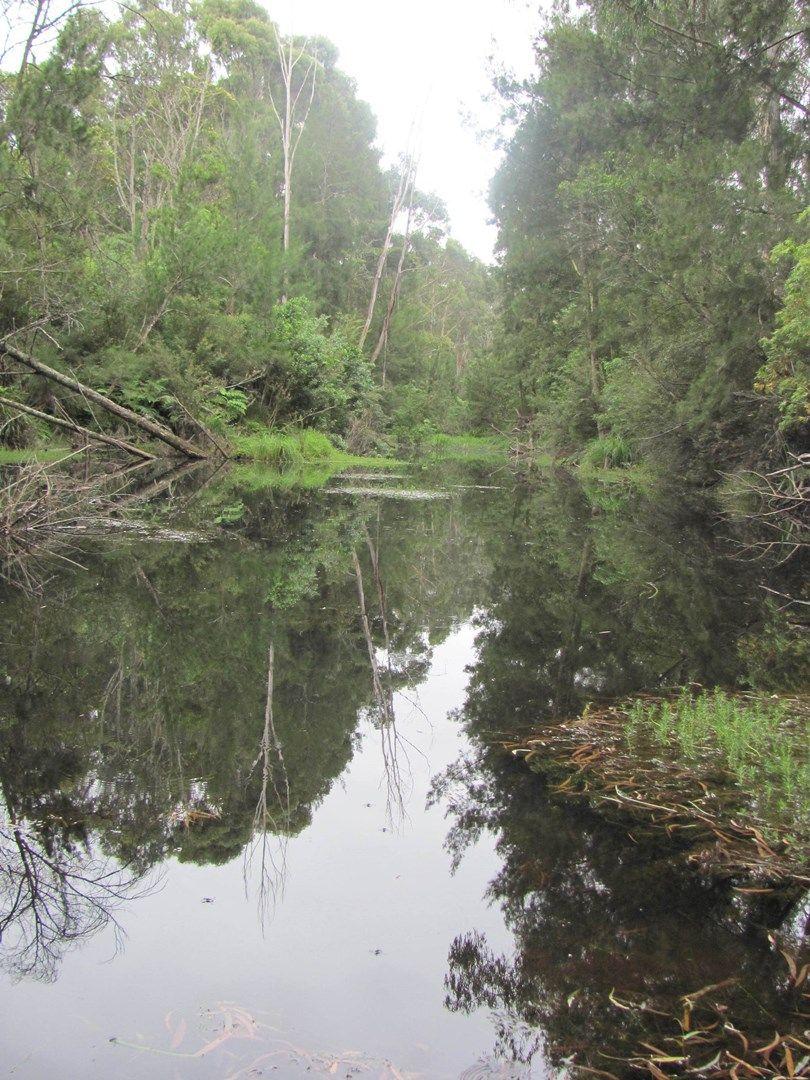 Lot 2, 375 Wamban Road, Moruya NSW 2537, Image 0