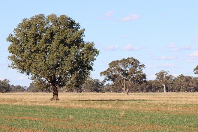 Picture of 4603 ''Glengariff'' Condo/ Wyalong Road, WEST WYALONG NSW 2671