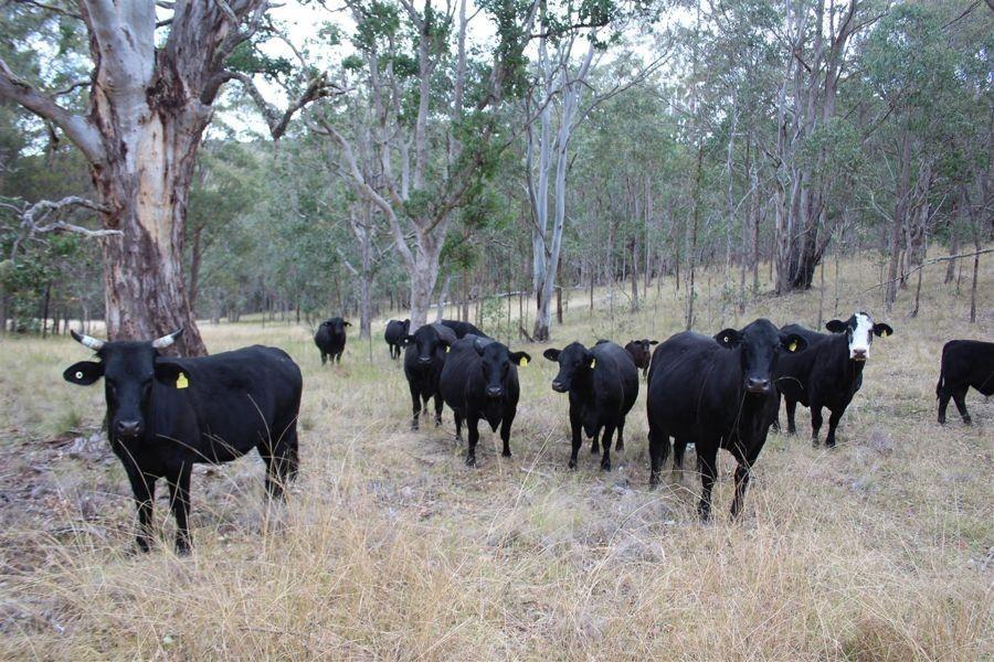 1465 Billirimba Road, Tenterfield NSW 2372, Image 1
