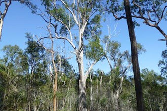 Picture of TEEBAR QLD 4620