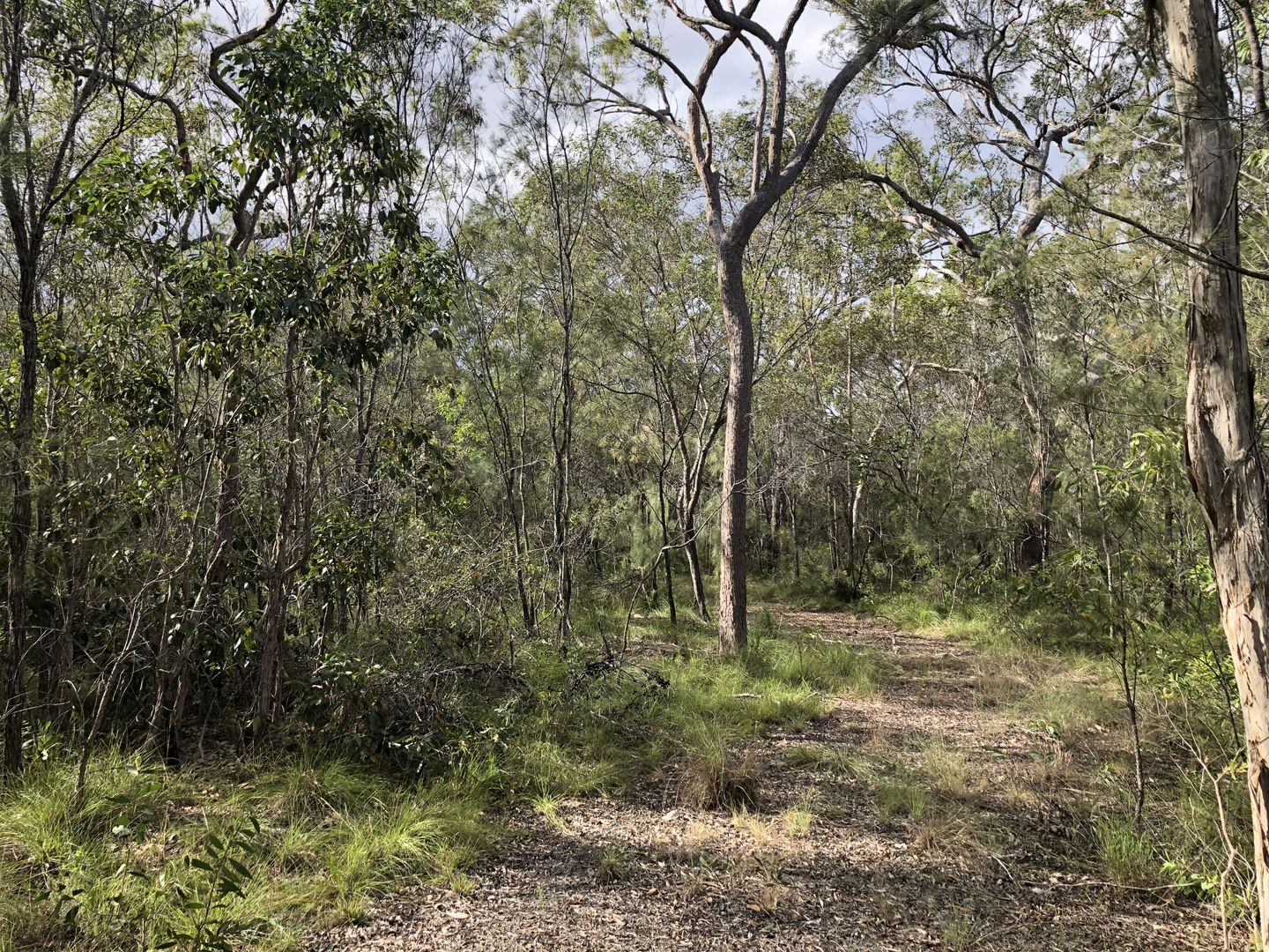 4 Pacific Haven Circuit, Pacific Haven QLD 4659, Image 1
