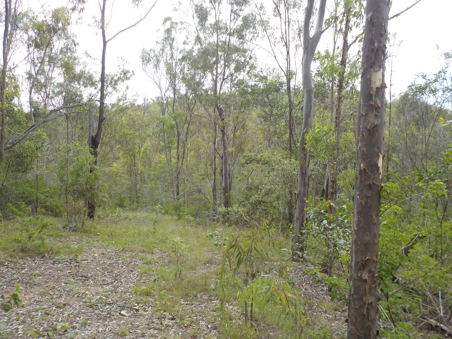 ZIMMERLIE ROAD, Gin Gin QLD 4671, Image 2