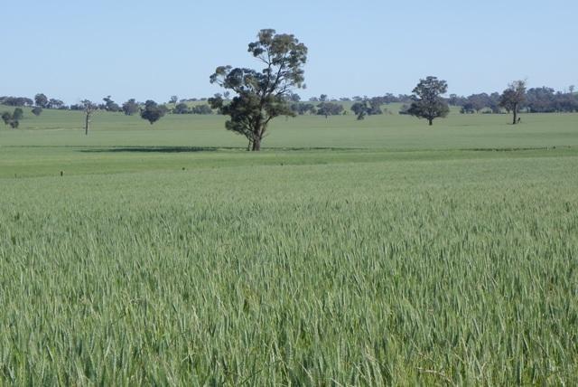 73 Ryan Siding, Alma Park NSW 2659, Image 1