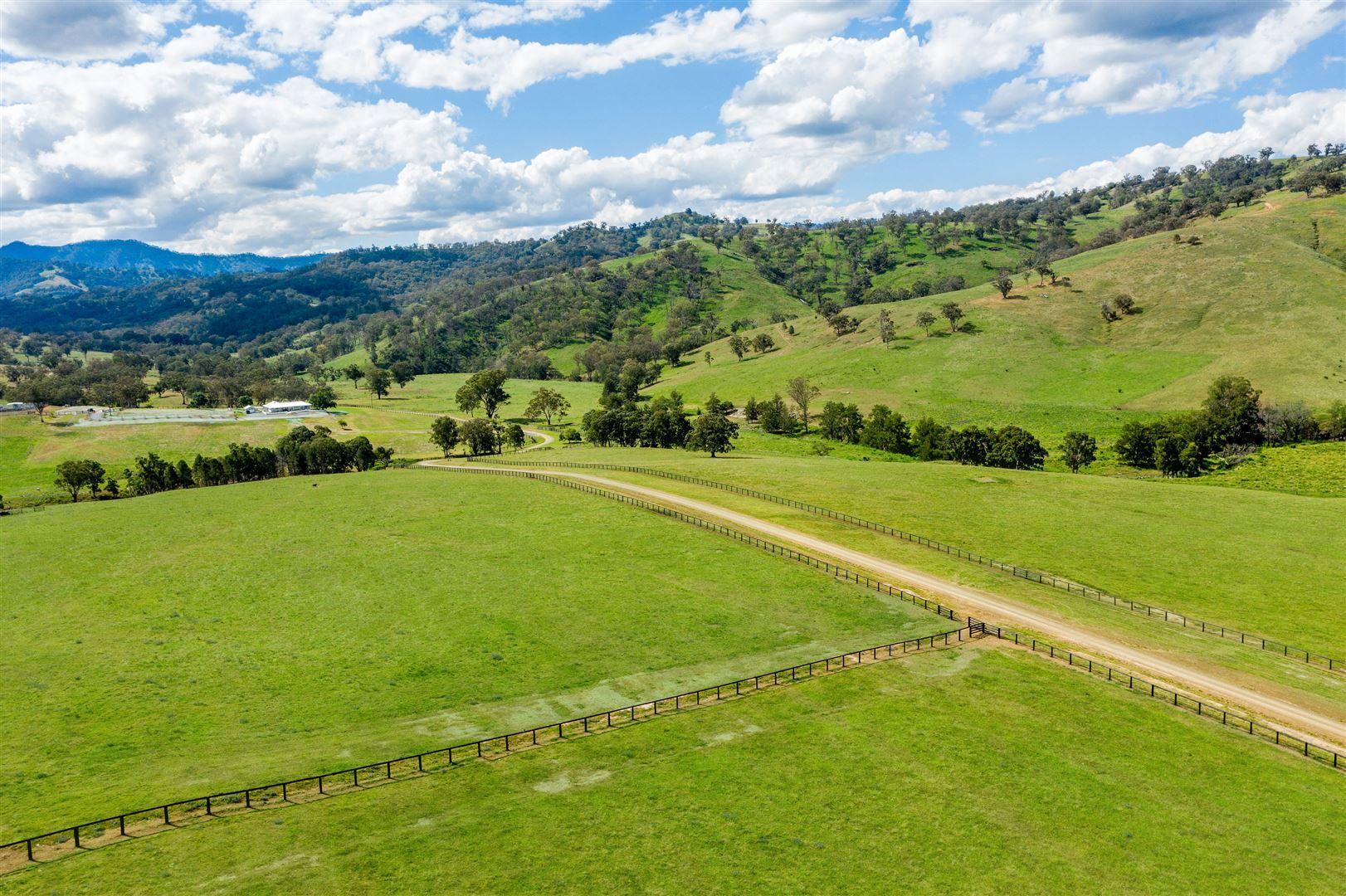 'Timor Cattle', Timor Creek Rd, Murrurundi NSW 2338, Image 2