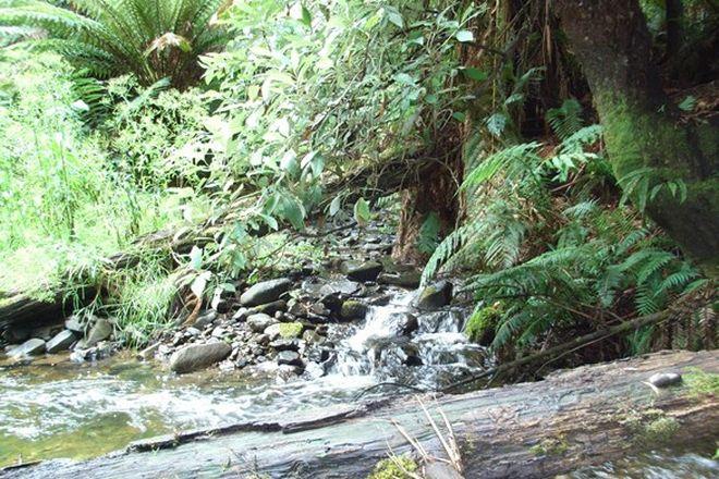 Picture of 1110 Skenes Creek-Forrest Road, TANYBRYN VIC 3249