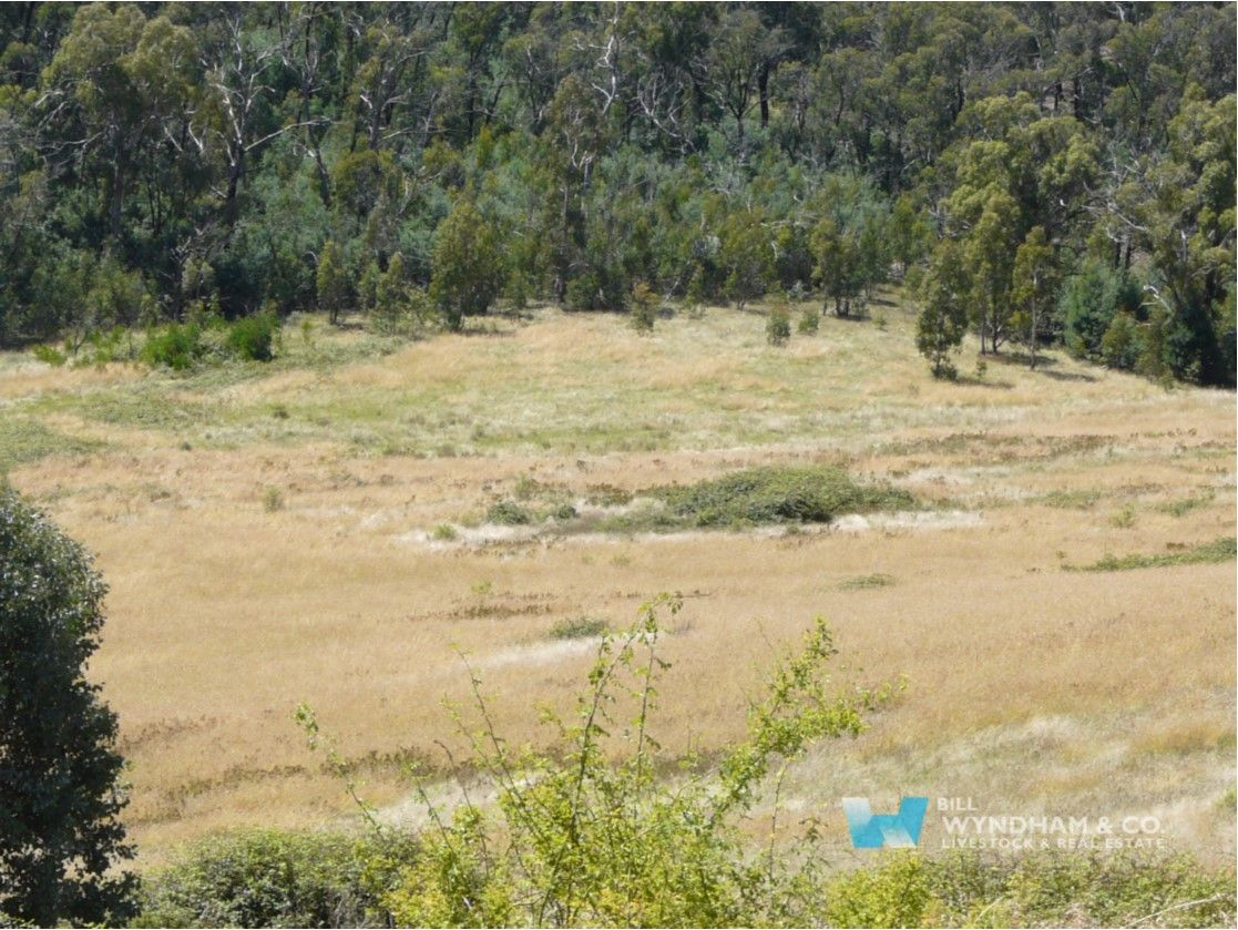 00 Scrubby Creek Track, Omeo VIC 3898, Image 0