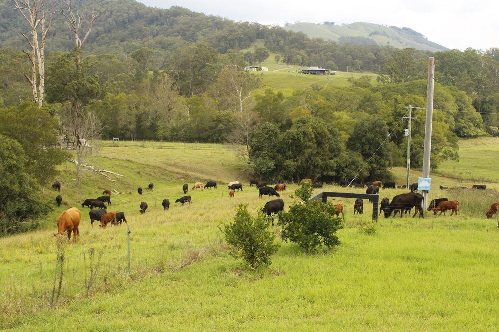 Kindee NSW 2446, Image 1