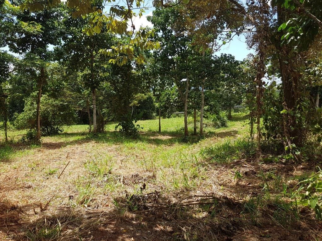 17 Ironbark Road Diwan, Daintree QLD 4873, Image 2