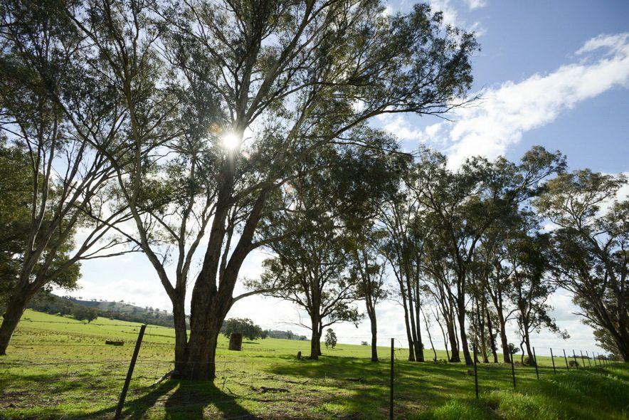 6/248 Back Brawlin Road, Cootamundra NSW 2590, Image 2
