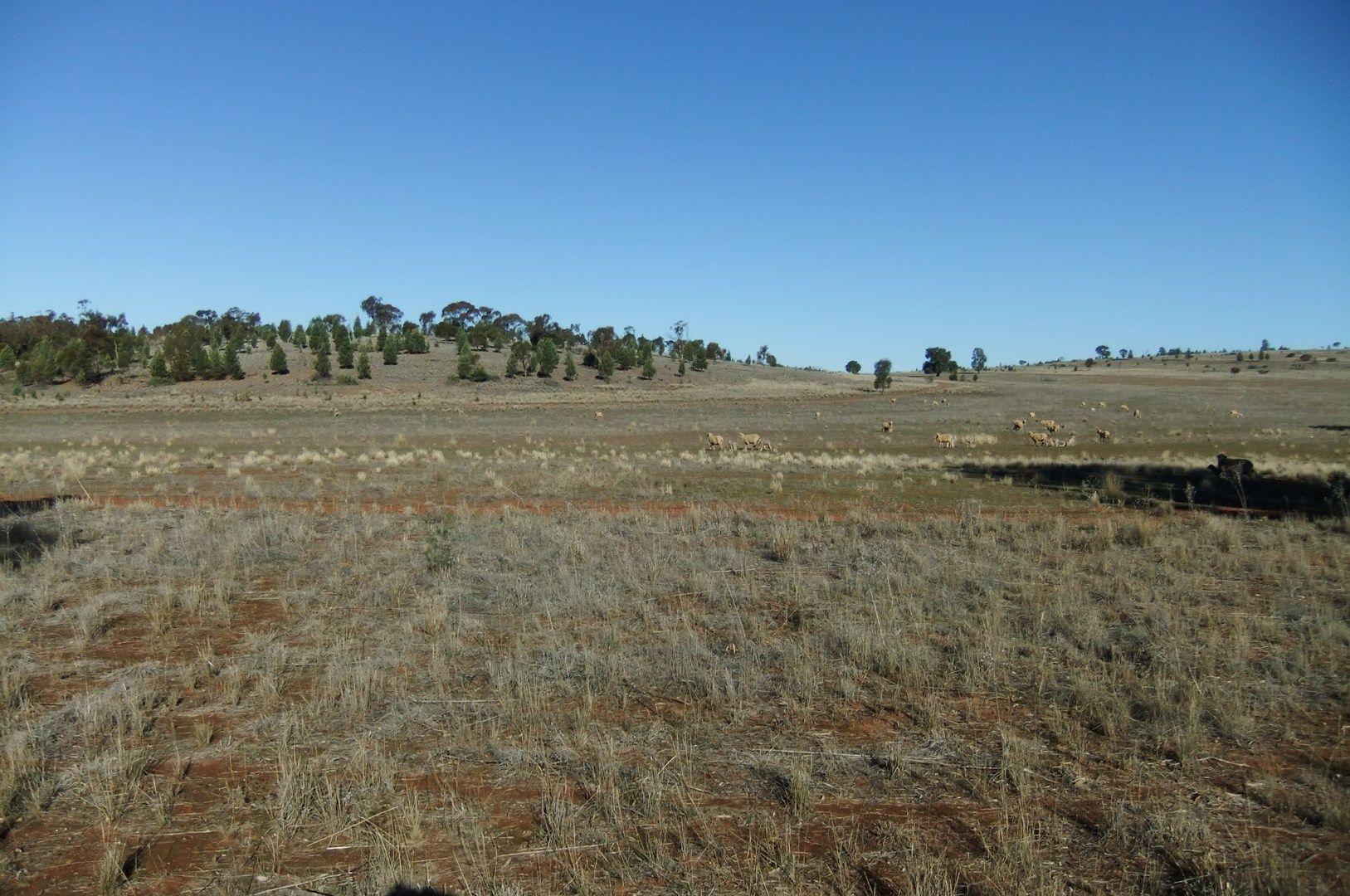 Rankins Springs NSW 2669, Image 1