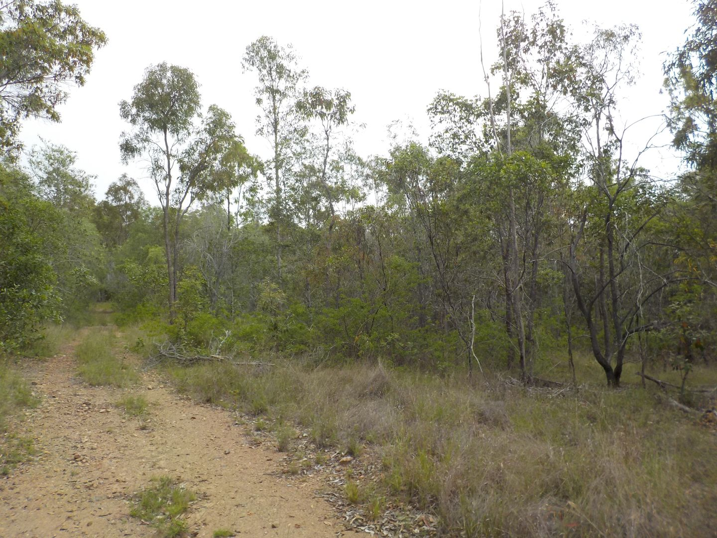 ZIMMERLIE ROAD, Gin Gin QLD 4671, Image 1