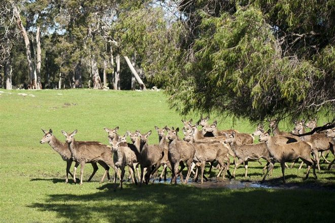 Picture of ' Margaret River Venison, COWARAMUP WA 6284