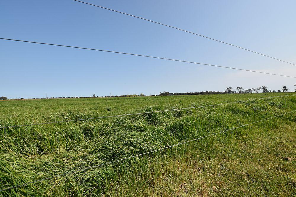 1752 Graham Road, Tongala VIC 3621, Image 2