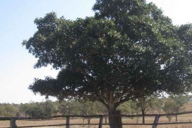 Picture of 55 Rifle Range Road, GAYNDAH QLD 4625