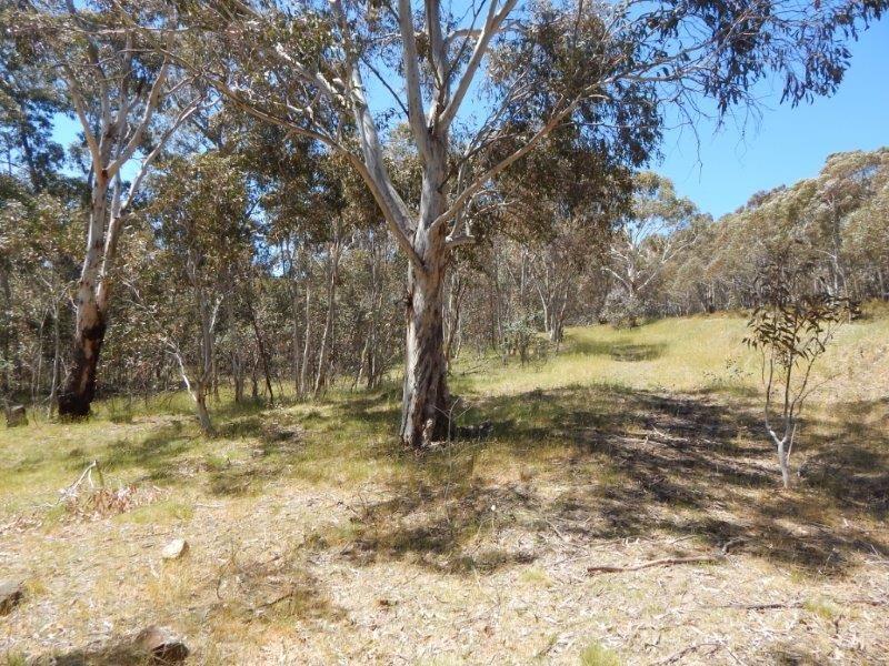 Lot 101 Providence Portal via, Adaminaby NSW 2629, Image 2