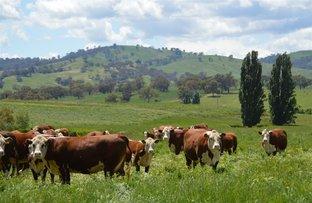Picture of Belmore Oberne Creek via, Wagga Wagga NSW 2650