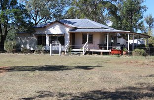 Picture of Wadgie Farm, Warialda NSW 2402
